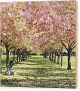 Under The Cherry Blossom Trees Wood Print
