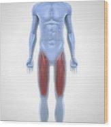 Upper Leg Muscles Wood Print