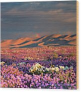 Usa, California, Dumont Dunes Wood Print
