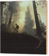 Usa, California, Forest Fire, Sequoia Wood Print