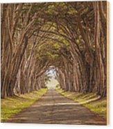 Valiant Trees Wood Print