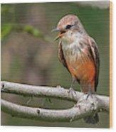 Vermilion Flycatcher Wood Print