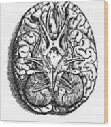 Vesalius: Brain Wood Print