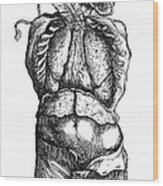 Vesalius: Thoracic Cavity Wood Print