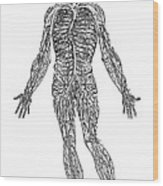 Vesalius: Venous System Wood Print