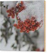 Viburnum Shrub In Snow Wood Print
