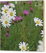 View Of Daisy Flowers In Meadow Wood Print