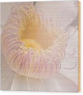 Vintage Pink And Yellow Flower Wood Print