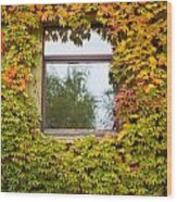 Wall Overgrown With Fall Colored Vine And Ivy Wood Print