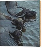 Water Buffalos Wood Print
