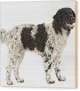 Water Dog Wood Print