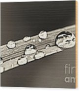 Water Drops On Grass Blade Wood Print