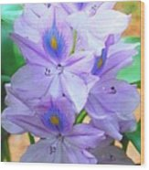Water Hyacinth Wood Print