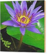 Water Lily 20 Wood Print