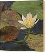 Water Lily 25 Wood Print