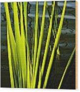 Water Reeds Wood Print