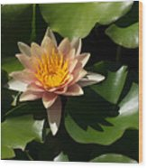 Exotic Colors - A Soft Coral Waterlily Wood Print