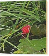 Watter Lilly Wood Print