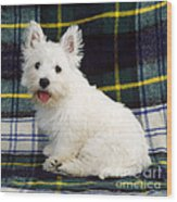 West Highland White Terrier Puppy Wood Print