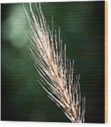 Wheat Grass Wood Print