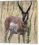 Where The Antelope Play Wood Print
