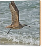 Whimbrel In Flight Wood Print