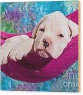 White Boxer Dog Puppy Wood Print by Doreen Zorn