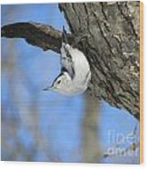 White-breasted Nuthatch  Wood Print