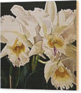 White Cattleya Orchids Wood Print