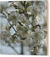 White Cherry Blossoms Wood Print
