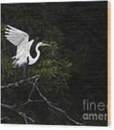 White Egret's Takeoff Wood Print