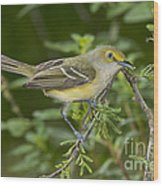 White-eyed Vireo Wood Print