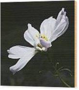 White Flower In Bloom Wood Print