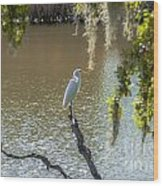 White Heron In Magnolia Cemetery Wood Print