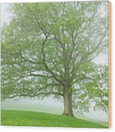 White Oak Tree In Fog Wood Print