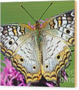 White Peacock Butterfly Anartia Wood Print