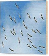 White Pelican Sky Wood Print
