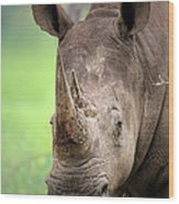 White Rhinoceros Wood Print by Johan Swanepoel