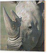 White Rhinoceros Portrait Wood Print