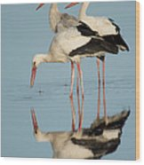 White Storks Ciconia Ciconia In A Lake Wood Print