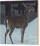 White Tail Deer Wood Print by Brenda Brown