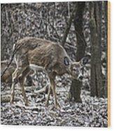 White-tail Deer Wood Print