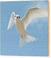 White Tern (gygis Alba Rothschildi Wood Print