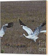 Whooping Cranes Wood Print