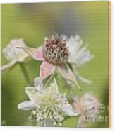 Wild Black Raspberry Blossom Wood Print
