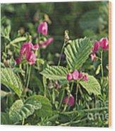 Wild Grass Flower Wood Print