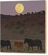 Wild Horse Moon  Wood Print by Jeanne  Bencich-Nations
