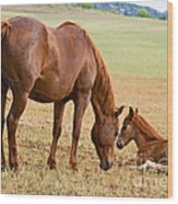 Wild Horse Mother And Foal Wood Print