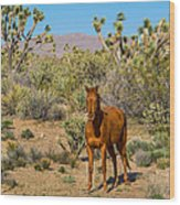 Wild Horse Of Joshua Tree Wood Print