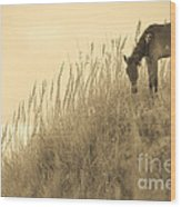 Wild Horse On The Outer Banks Wood Print